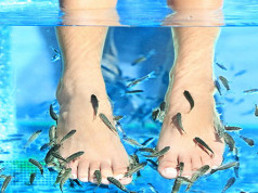 Fish Pedicure (rybki Garra Rufa)